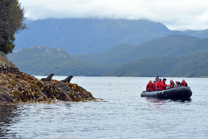 Here I am taking a group of guests in a Zodiac by a couple of New Zealand fur seals as they rest on shore.
