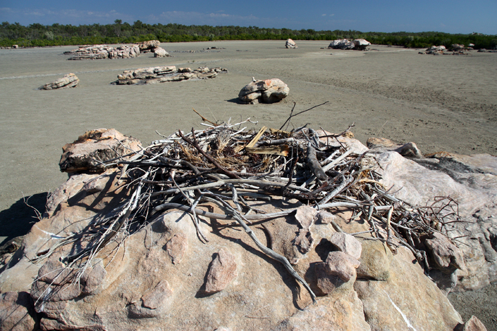 An Osprey Nest built on top of stone in the middle of a salt pan environment.