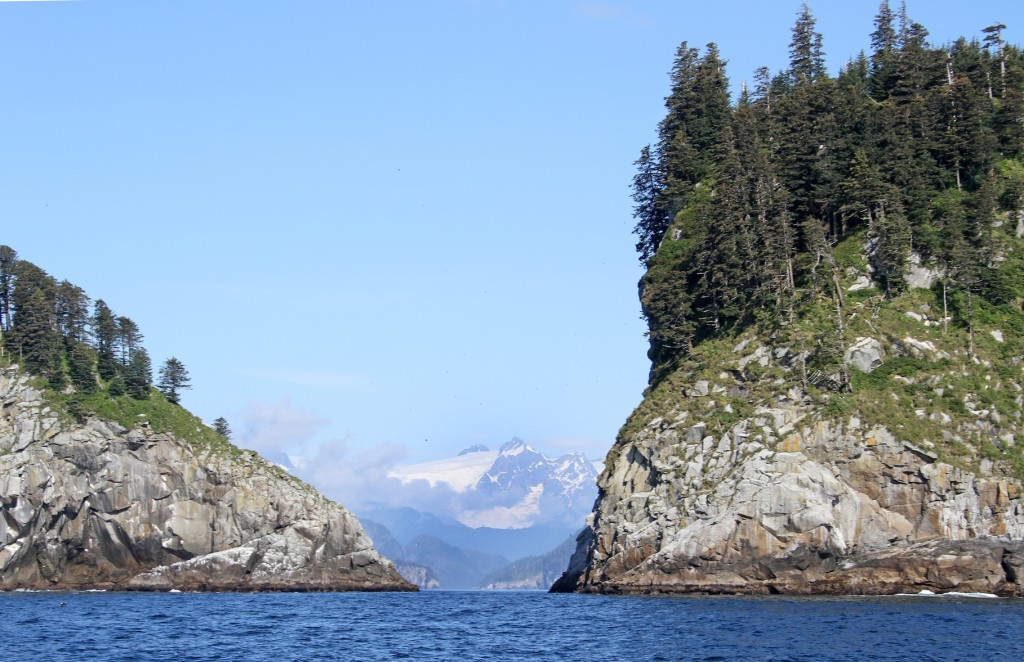 Chiswell Islands, one of my favorite Zodiac cruises of the season.
